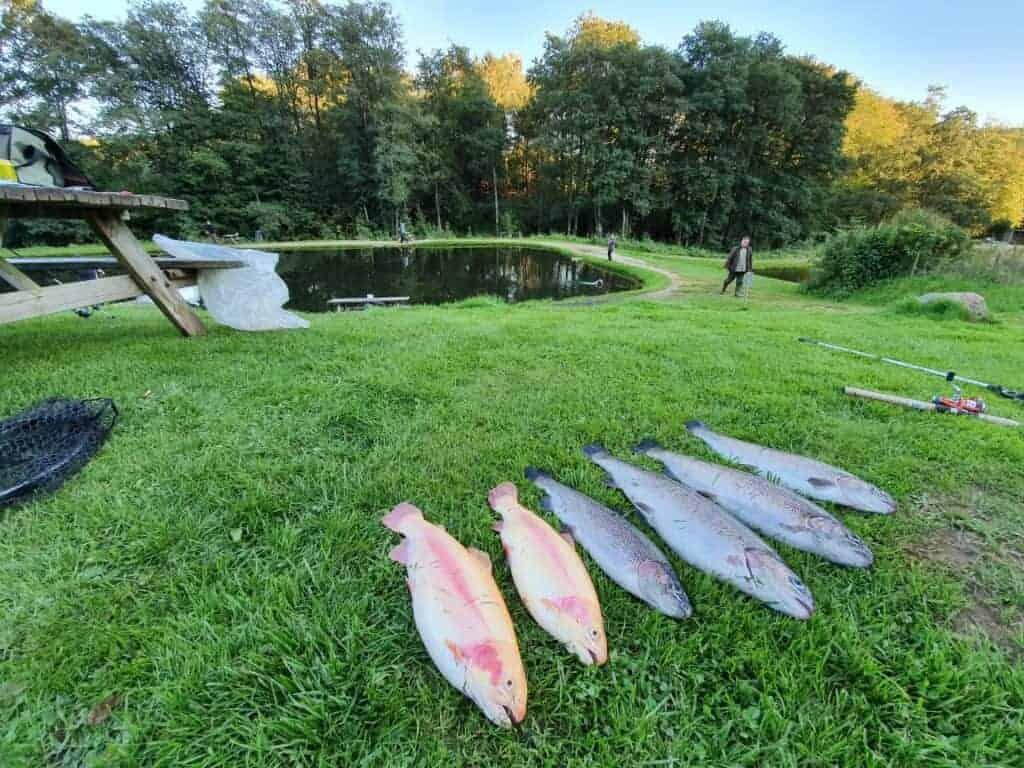 Lundum lystfiskersø - Put and take - Blink fiskesø