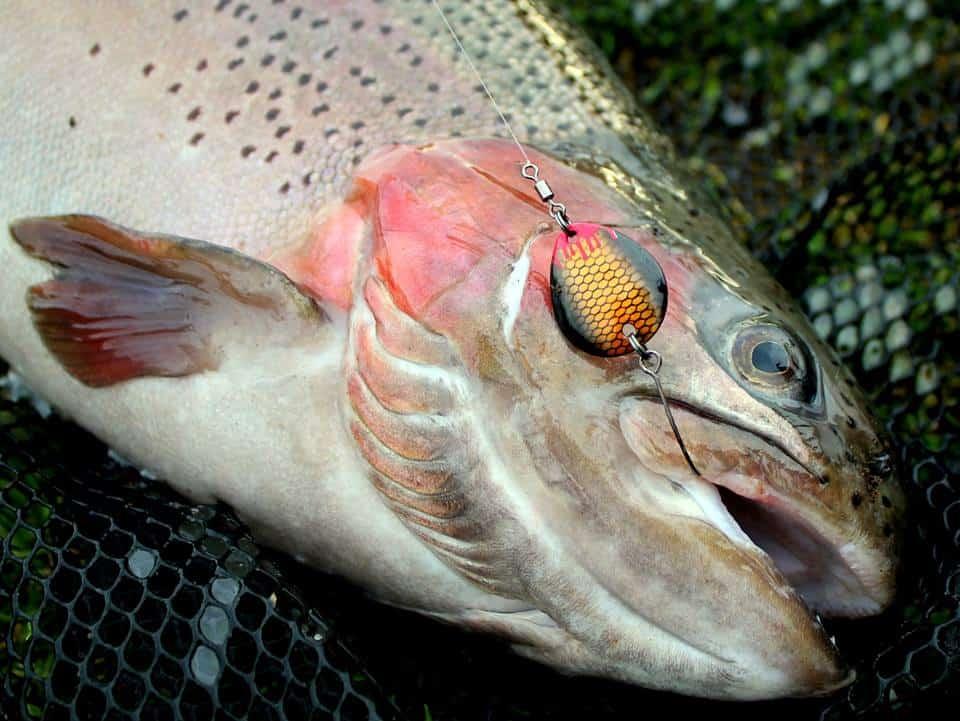 UL blink- vs Udveksling! Fisk med den rigtige hastighed