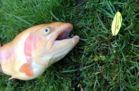 Release rig til ørredfiskeri! Fup eller Fidus?