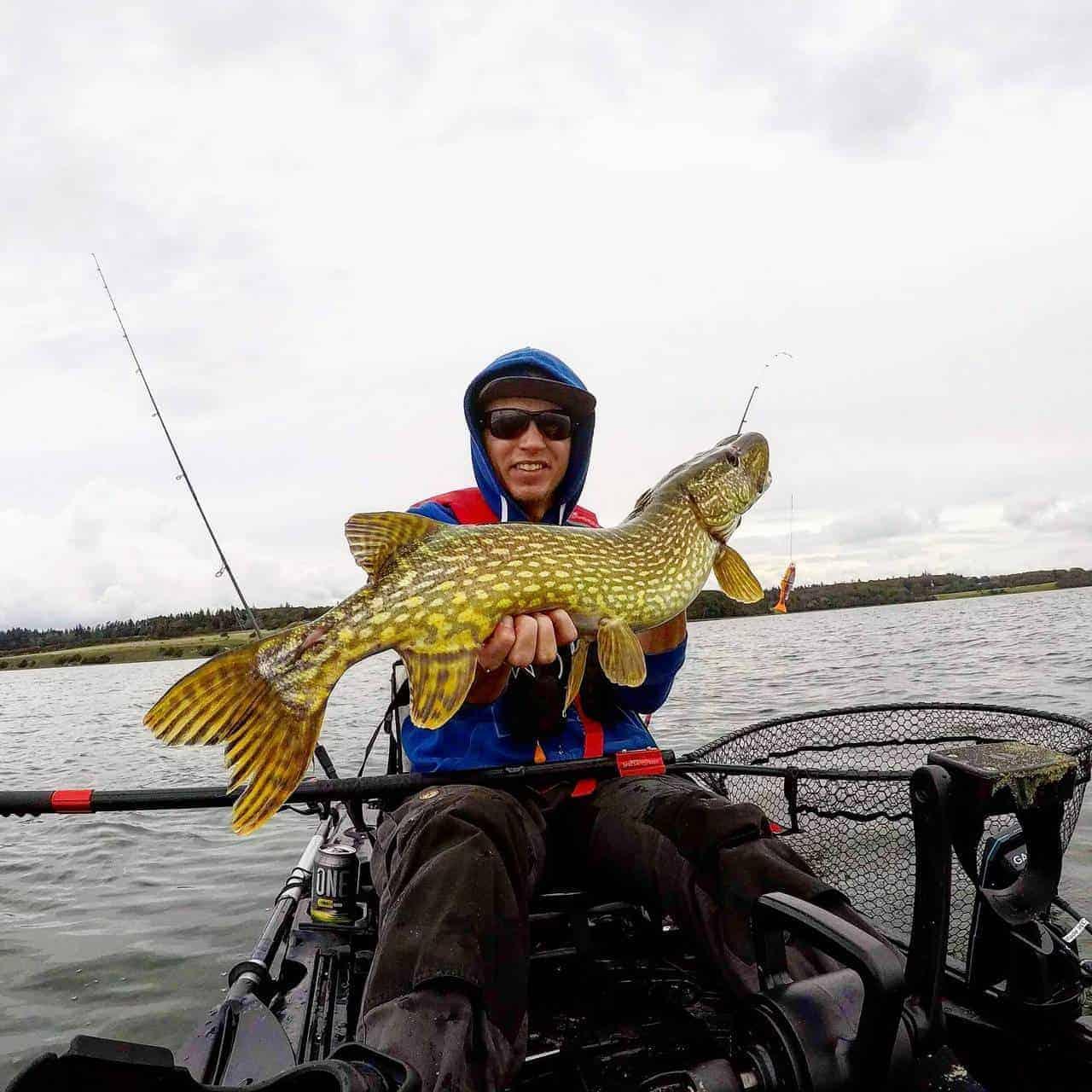 Geddefiskeri fra kajak