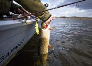 geddefiskeri savage gear bedst fiskepladser