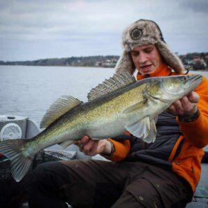 sæson for fiskeri efter sandart