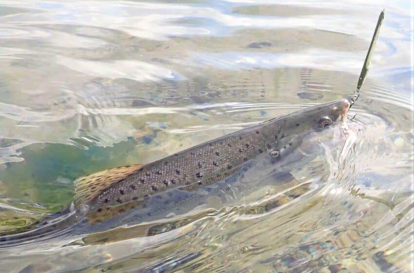 Lystfiskeri i Limfjorden – Den store fiske guide 2020