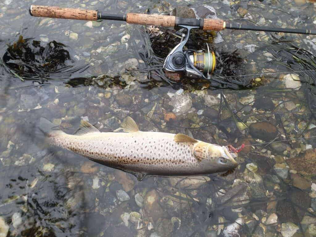 Fiskepladser efter havørred i limfjorden - Havørredfiskeri