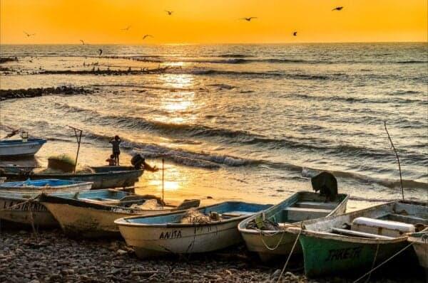 makrelfiskeri fra båd - fiskeri efter makrel 2019 - 2020