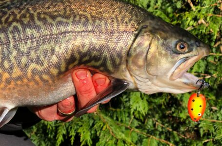 Fidus micro blink fidusen tilbud put and take fiskeri