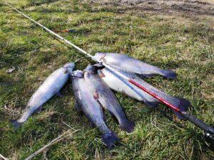 Bombarda fiskestang tilbud - Bedste fiskestang til put and take og kysten