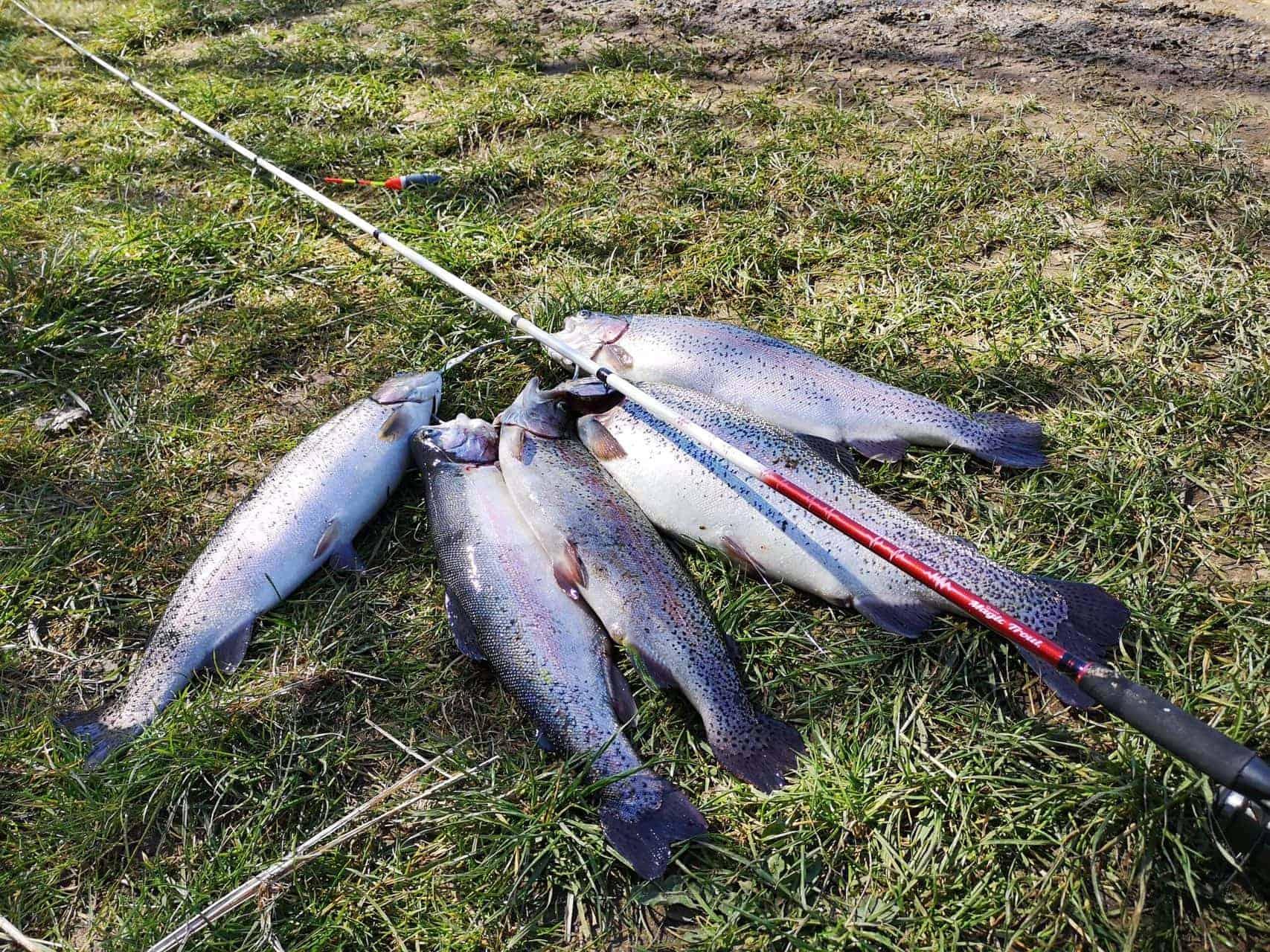 Vælg den rigtige fiskestang til bombarda fiskeri