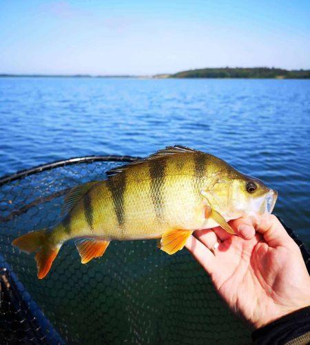 Aborrefiskeri med fiskestang fra fiskekajak