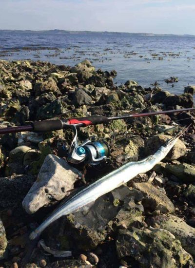 Fiskeri efter hornfisk - fiskesæt til hornfisk